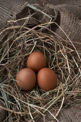 Ecological natural fresh eggs in bird nest born