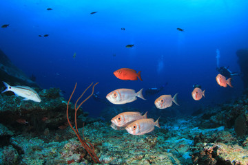 Scuba diving coral reef and fish in ocean