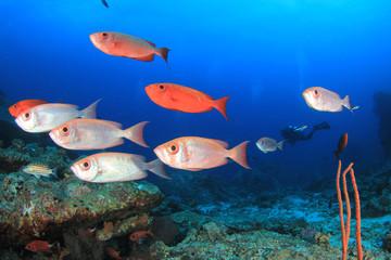 Scuba diving coral reef and fish in ocean