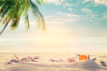 Seaside summer beach with starfish, shells, coral on sandbar and blur sea background. Concept of summertime on beach. vintage color tone.
