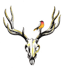 Deer skull and a bird