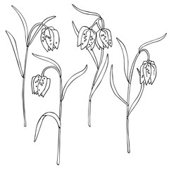 vector white black contour sketch of fritillaria meleagris bell wild flowers