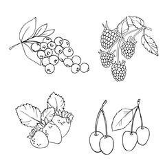 vector white black contour sketch of berryeis set blueberry raspberry strawberry cherry