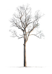 nature tree on white background of Isolated