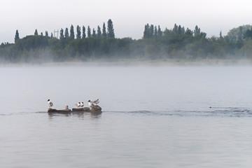 Wall Murals Zebra Gulls on a misty lake.