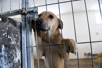 Behind the bars in a stray dogs shelter