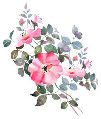 Rose watercolor flower illustration