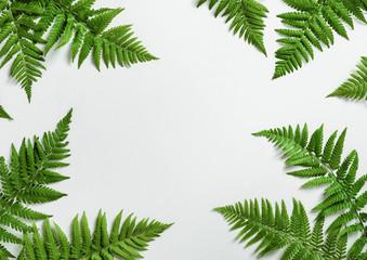 Fern botanical background