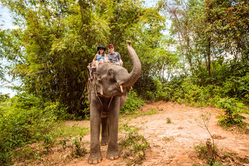 Tourists  are riding on elephants through the jungle