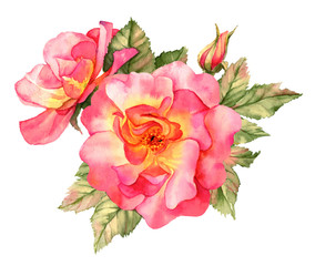 Bright red rose watercolor illustration