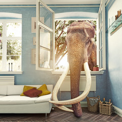 The elephant in the room. Photocombination concept