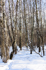 View of winter forest in sunny day