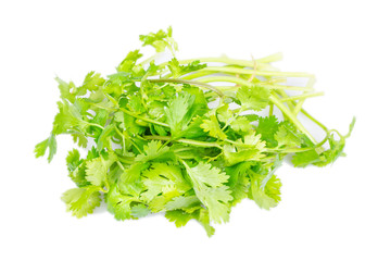 Isolated close up of coriander