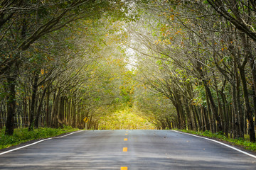 The road through the Rubber tree plantation in Phuket, Thailand