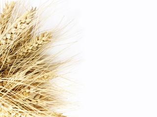 zboża, kłosy, wieś, pszenica