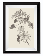 Vintage Retro Vector Drawing Illustration of a Maple Leaf Plant Flower in a Frame. Perfect for Web Design, Shirts, Scrapbooking, Logos, Badges. Great as a Graphic Ressource for Illustration Work.