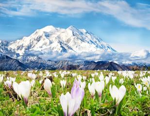 Frühling im Gebirge - Spring in the mountains