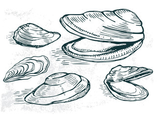 oyster sea food element