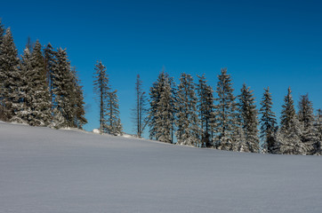 Row of trees over snow field, Gorce mountains, Poland, winter