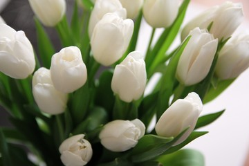 A large bouquet of white tulips with green leaves