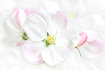 Beautiful spring flowers in blossom. Floral wallpaper