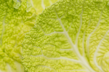 Savoy Cabbage Leaves