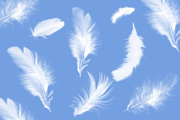 the background of white feathers on a blue background