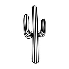 cactus desert plant icon vector illustration design