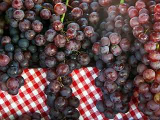 Fresh purple grapes