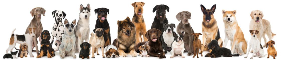 Foto op Plexiglas Hond Verschiedene Rassehunde