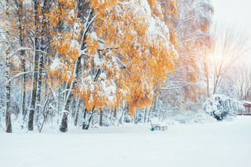 October mountain beech forest with first winter snow. Carpathians. Ukraine Europe