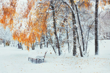 Snow-covered trees with autumn leaves and benches in the city pa