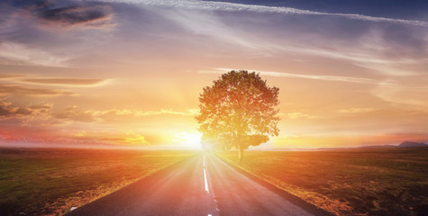 Fantastic landscape asphalt road and lonely tree at sunset. A be Wall mural