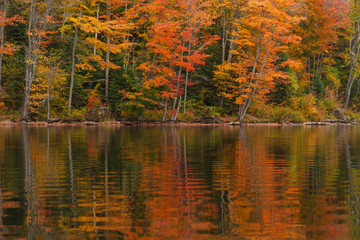 Autumn reflection of red trees  in a still lake