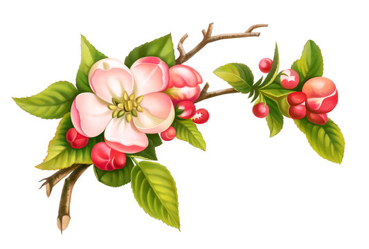 9,657 BEST Apple Blossom Drawing IMAGES, STOCK PHOTOS & VECTORS | Adobe Stock