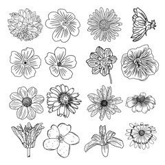 Tropical floral set. Tropical exotic and domestic summer flowers collection in bright colors and drawing style. Vector illustration.