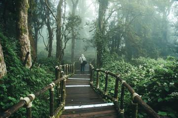 Rainforest in northern of Thailand