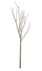 tree isolate