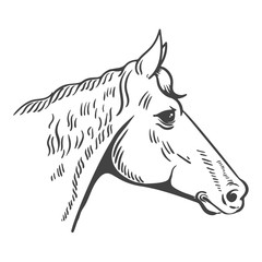 Horse head illustration isolated on white background. Design element for logo, label, emblem, sign, poster, t-shirt print. Vector illustration.
