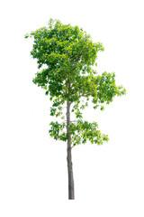 nature tree on white background of Isolated