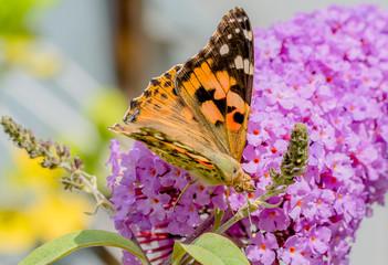 Farbiger Schmetterling auf Blume im Frühling