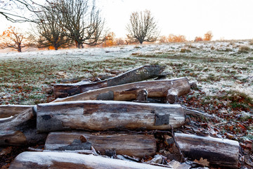 Frosty woods in Richmond Park, London