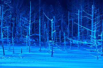 ライトアップされた美瑛白金の青い池