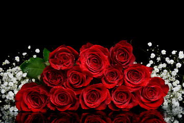 dozen red roses black background