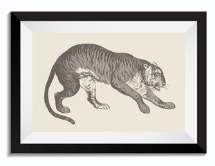 Vintage Retro Vector Drawing Illustration of a Tiger Animal in a Frame. Perfect for Web Design, Shirts, Scrapbooking, Logos, Badges. Great as a Graphic Ressource for Illustration Work.