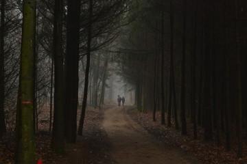 Acrylic Prints Horses ruiter loopt naast paard in donker winderbos