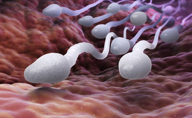 Male sperm cells