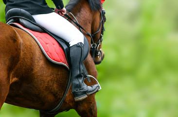 Horse riding closeup