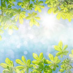 Hintergrund mit Blättern vom Kastanienbaum