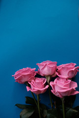 bouquet pink roses on a blue background